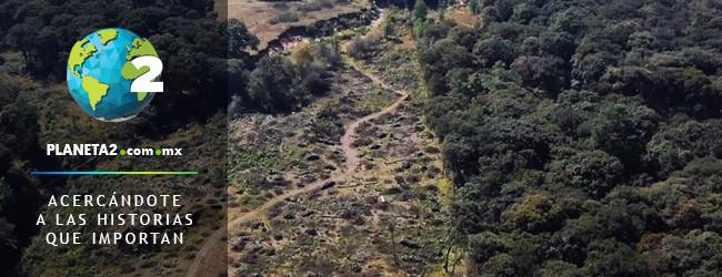 Bosque Diamante, ecocidio, corrupción Jilotzingo