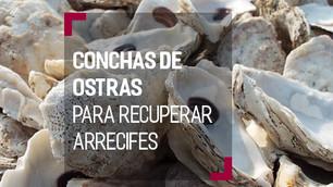 Reciclan conchas de ostras para restaurar arrecifes