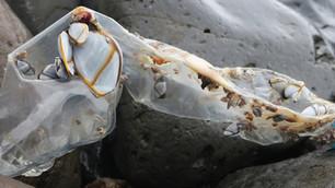 Isla Inaccesible contaminada por plásticos debido a buques y navíos asiáticos