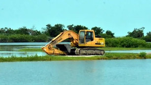 Campeche se está quedando sin manglares