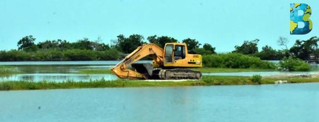 Saquean manglares de Campeche