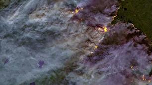 Rusia declara emergencia por incendios forestales en Siberia