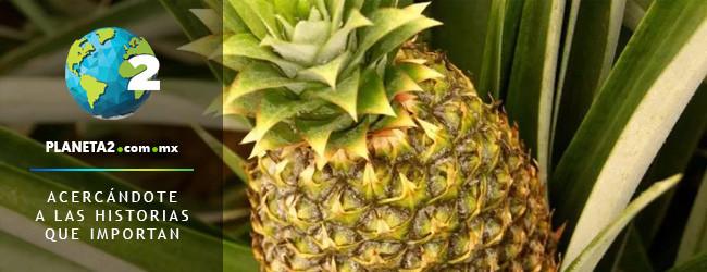 piñas PNUD Costa Rica flor agroindustrias