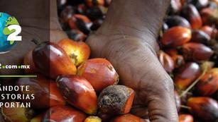 Wilmar, el gigante del aceite de palma, se comprometió a detener la deforestación