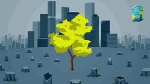 CDMX pierde 15.7 kilómetros cuadrados de áreas verdes en una década