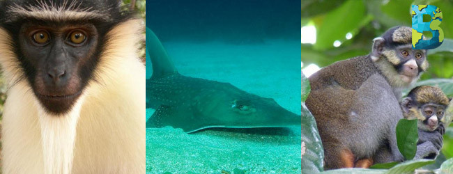 iucn informa que 30 mil especies están en peligro de extinción