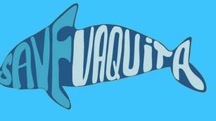 Vaquita Marina podría extinguirse en menos de un año