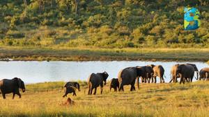 Prohíben operar a empresas mineras en el Parque Nacional Hwange de Zimbabue