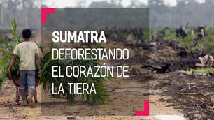 Ecosistema Leuser: el corazón de la tiera se está quedando sin sus selvas