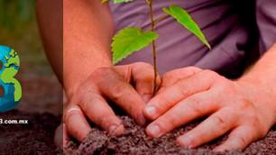 Plantarán en CDMX 10 millones de árboles
