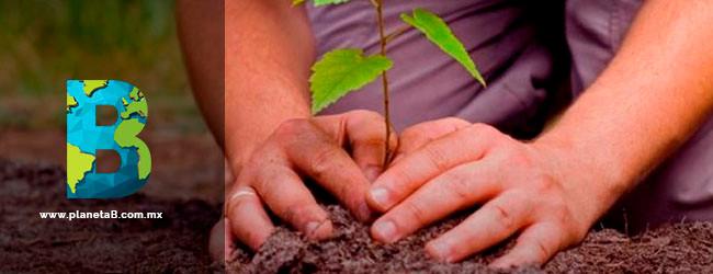 CDMX plantará 10 millones de árboles