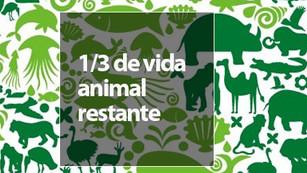 Dos tercios de la vida animal podrían extinguirse para el 2020