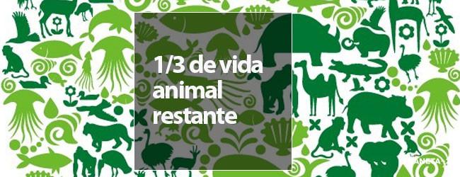 vida animal, extinción
