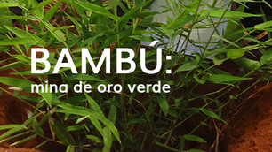 Zimbabue: de la madera al bambú