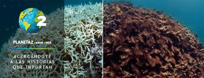 blanqueamiento y muerte de coral