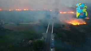 Incendios amenazan a la amazonía brasileña poniendo en riesgo al mayor humedal y a guacayamas azules