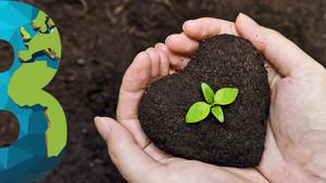Residuos de la producción de café podrían usarse para regenerar áreas deforestadas