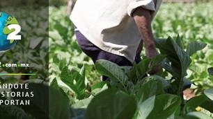 Avance en la ingeniería de plantas podría alimentar a millones de personas más