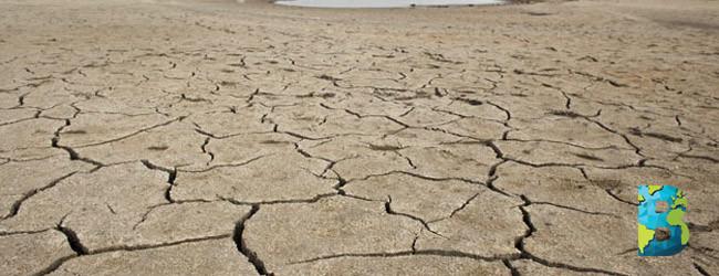 México pierde 50% de su cobertura vegetal