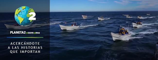 Sea Shepherd bajo ataque por defender vaquita marina