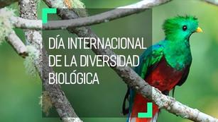 Día Internacional de la Diversidad Biológica, promover medidas que conduzcan a un futuro sostenible
