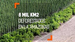 """""""Detengan la deforestación o detenemos el dinero"""". Ultimátum de Noruega a Brasil"""