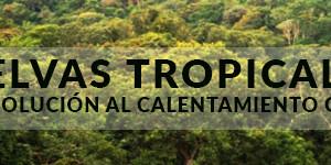 Selvas tropicales: ¿la cura para el calentamiento global?