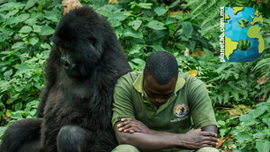 Virunga de luto: 12 guardabosques y 4 civiles mueren en un ataque en el Parque de Virunga