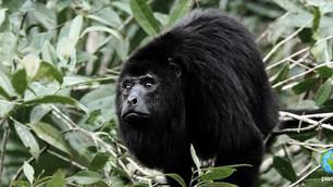 Más de 8 mil especies de flora y fauna amenazadas en México