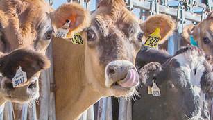 ¿Impuestos a la carne? Ya era hora