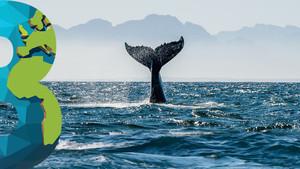 Rusia niega permiso de caza de ballenas y delfines y planea prohibirlo por siempre… ¡vaya!