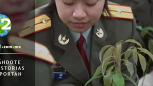 China da nueva orden a 60 mil soldados: plantar árboles para crear nuevos bosques y combatir la cont