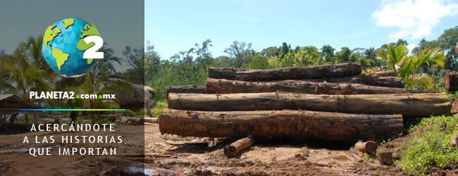 islas salomón deforestación
