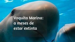 Con menos de 60 ejemplares, la vaquita marina está al borde de la extinción