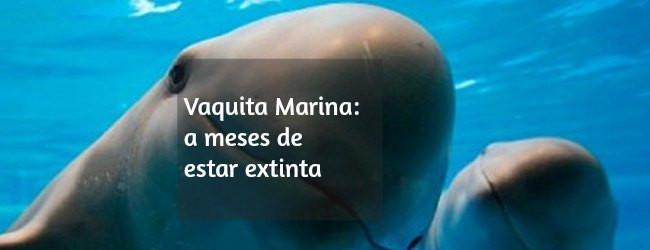vaquita marina extinción