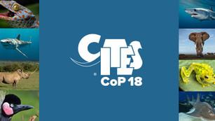 Países votan por protección de animales en convención de CITES en Ginebra
