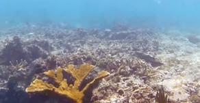 República Dominicana busca salvar sus arrecifes del turismo, el cambio climático y sopresca