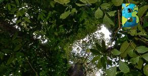 Costa Rica gestionará de forma digital sus bosques, incrementando la competitividad forestal
