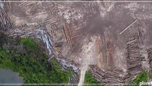 Papúa Nueva Guinea sus bosques en tan sólo 5 años
