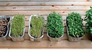Cultiva tus ingredientes y reduce tu huella de carbono