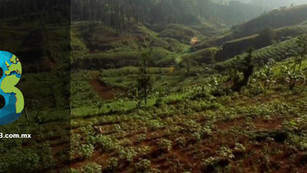 Conservation International restauró 300 hectáreas de bosque