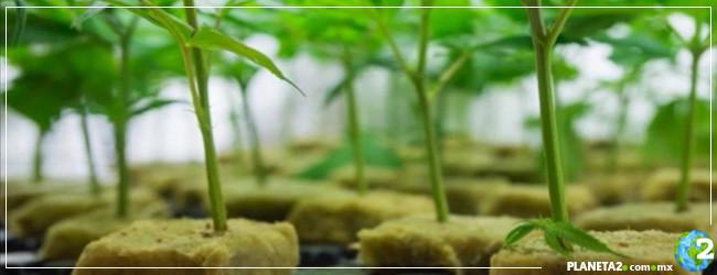 clonación plantas