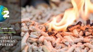Pellet México, produciendo biomasa para sustituir combustibles fósiles