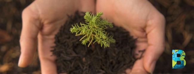 Filipinas mandatario plantar 10 árboles para graduarse