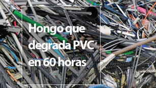 Descubren hongo que degrada el plástico PVC... en menos de 60 horas