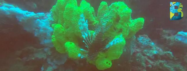 Científicos descubren corredor de arrecife en golfo de México