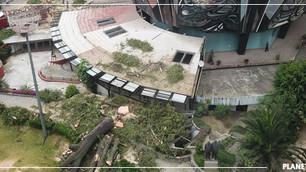 CDMX pierde 27 árboles cada día en los últimos seis años