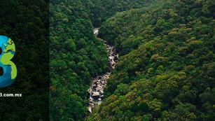 Bosque antiguo de Queensland bajo amenaza por cambio climático