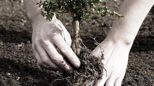 Reverdecer nuestro entorno reduce la misma cantidad de carbono que dejar el petróleo