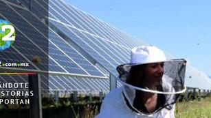 Miel y paneles solares: una combinación de energía limpia y colmenas de abejas